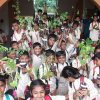 go green planting saplings